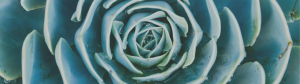 Succulent close-up - counseling for fertility