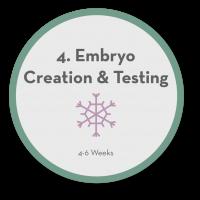4 Embryo